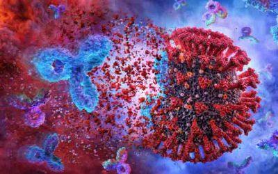Studio Nature: memoria immunitaria dura sei mesi